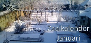 Zaaien in januari