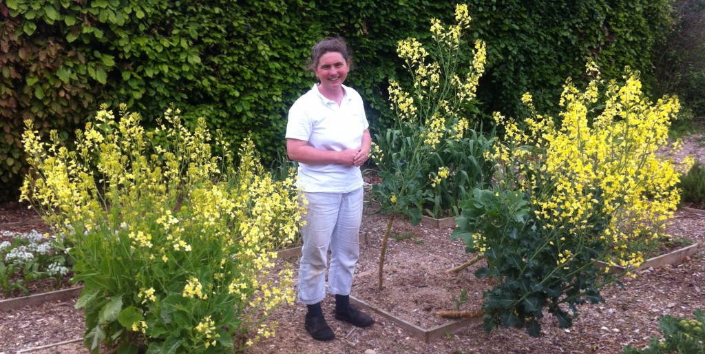 Invicta herbs, Kent (Engeland)